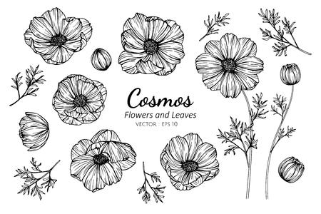 Sammlungssatz Kosmosblume und Blätter, die Illustration zeichnen für Muster, Logo, Vorlage, Banner, Poster, Einladungs- und Grußkartendesign.