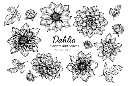 Collection set of dahlia flower and leaves drawing illustration. for pattern, template, banner, posters, invitation and greeting card design.