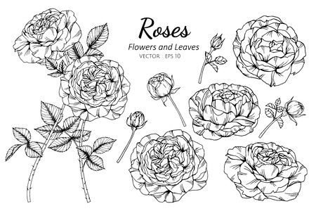Collection set of rose flower and leaves drawing illustration. for pattern, logo, template, banner, posters, invitation and greeting card design.
