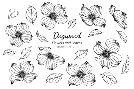 Collection set of dogwood flower and leaves drawing illustration. for pattern, template, banner, posters, invitation and greeting card design. Illustration