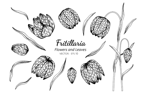 Collection set of fritillaria flower and leaves drawing illustration. for pattern, template, banner, posters, invitation and greeting card design.