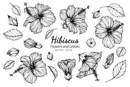 Conjunto de colección de flor de hibisco y hojas de dibujo ilustración. para el diseño de patrones, logotipos, plantillas, pancartas, carteles, invitaciones y tarjetas de felicitación.