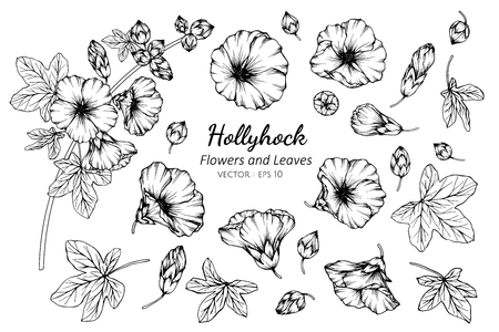 Collection set of hollyhock flower and leaves drawing illustration. for pattern, logo, template, banner, posters, invitation and greeting card design.