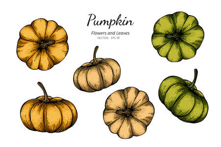 Collection set of pumpkin drawing illustration.