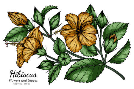 Orange Hibiscus flower and leaf drawing illustration with line art on white backgrounds. Illustration
