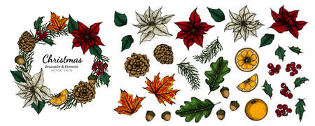 Collection set of Christmas decorative flower and leaves drawing illustration.