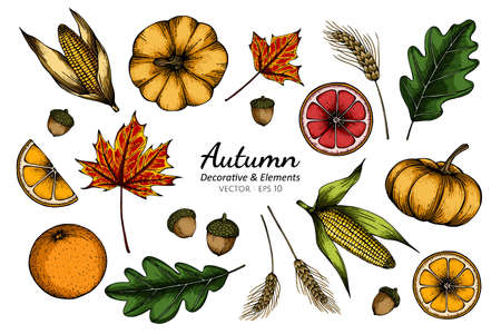 Collection set of autumn flower and leaves drawing illustration.