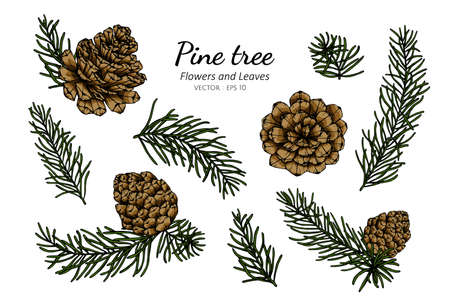 Collection set of pine cone and leaves drawing illustration.