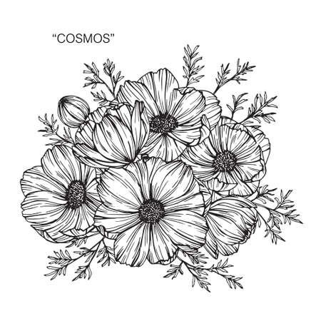Cosmos flower and leaf hand drawn botanical illustration with line art. Vektorové ilustrace