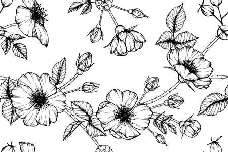 Seamless pattern wild rose flower and leaf hand drawn botanical illustration with line art.