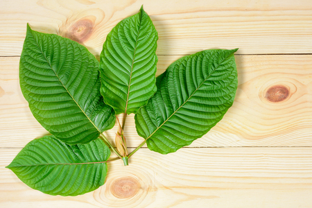 Mitragyna speciosa or Kratom leaves on wood background