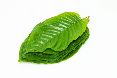 Pile of Mitragynina speciosa or Kratom leaves plant isolated on white 스톡 콘텐츠