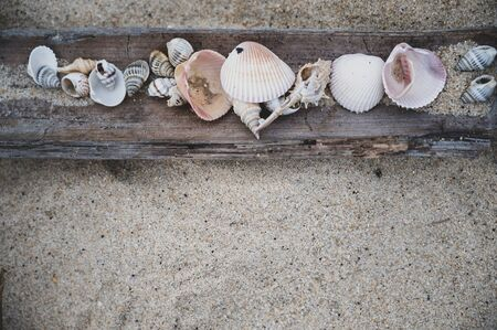 Sea shells on wood, sand beach background, top view Banque d'images - 130903084
