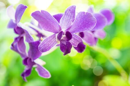 Purple orchid bunch, blurred nature background Фото со стока