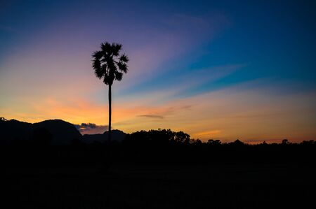 Silhouette of palm tree in field and mountain with colourful sunset sky