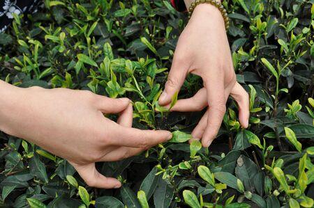 Hand and Tea photo