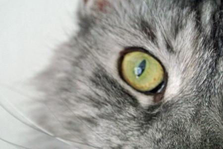 smooch: Cat