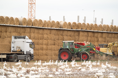 Agriculture Standard-Bild