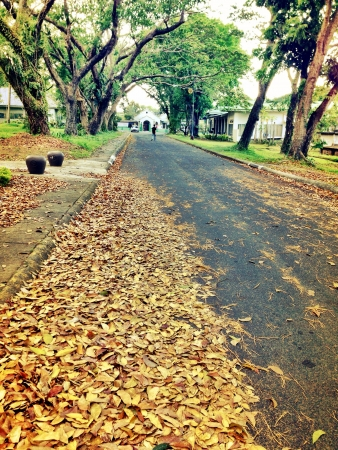 backdrop: Autumn leaves on the ground