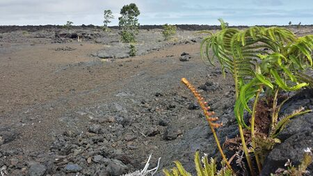 A fern offers a splash of color to the barren volcanic landscape