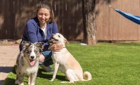 Female with two dogs focus on the happy Australian Shepherd puppy. copy space to the right of the image.