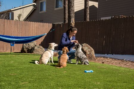 Dogs doing tricks and waiting for treats. Chiweenie is shaking while the Australian Shepherd and Basenji Mix wait. Wide angle.