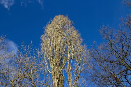huge tree in backlight Stock Photo - 17071212