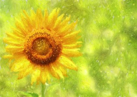 Sunflower   Helianthus Impressionism painted Stock Photo