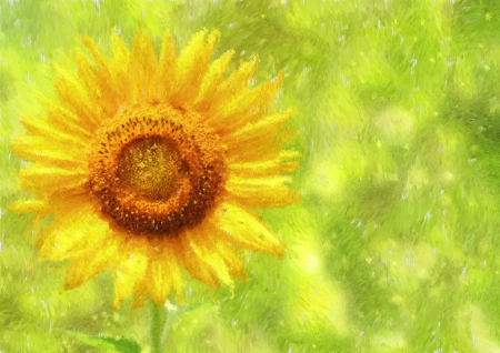 Sunflower   Helianthus Impressionism painted Stock Photo