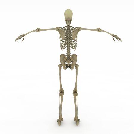 現実的には、詳細と焼くサイトの骨格解剖学的に正確な女性