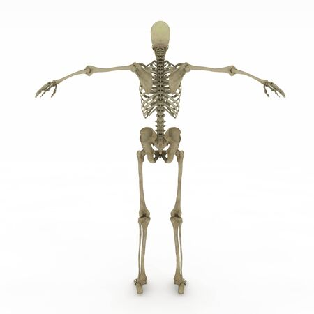 Realistic, detailed and anatomically accurate Female skeletal in bake site