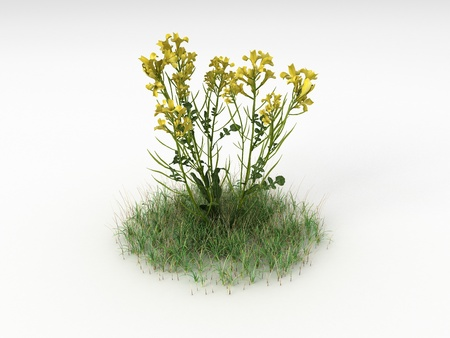 brassica: Render illustration of the Different Plants and Grass