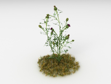 invasive: Render illustration of the Different Plants and Grass