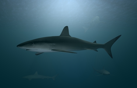 3D Illustration and rendering of great white sharks