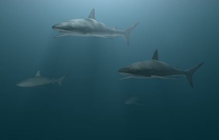 3D Illustration and rendering of great white sharks illustration