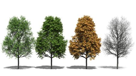 four seasons: 3D computer rendered illustration platanoides Four Seasons