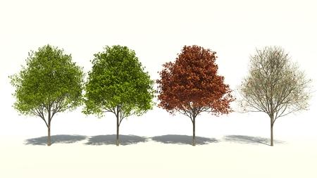 saccharum: 3D computer rendered illustration saccharum Four Seasons