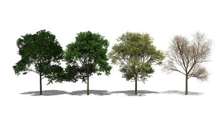 food poison: 3D computer rendered illustration Adenanthera pavonina Four Seasons Stock Photo