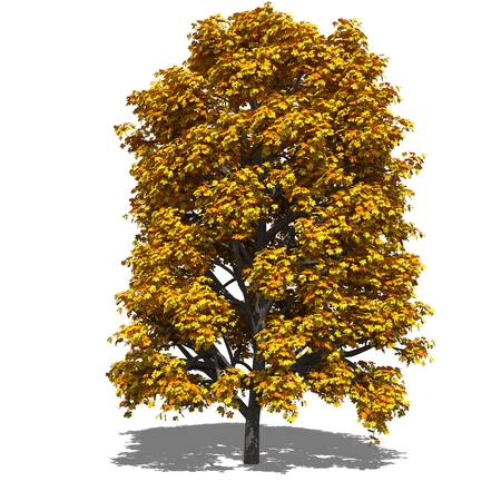 aesculus hippocastanum: 3D computer rendered illustration Aesculus hippocastanum autumn