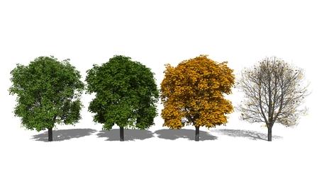 aesculus hippocastanum: 3D computer rendered illustration Aesculus hippocastanum Four Seasons