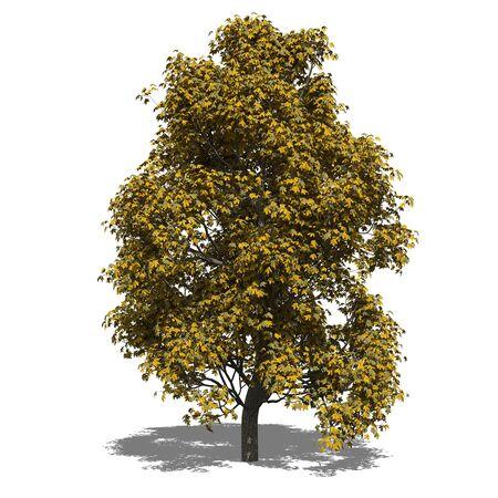 aesculus hippocastanum: 3D computer rendered illustration Aesculus x carnea autumn Stock Photo