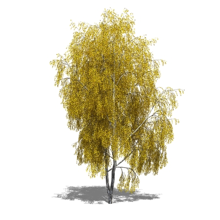 betula pendula: 3D computer resi illustrazione Betula pendula autunno