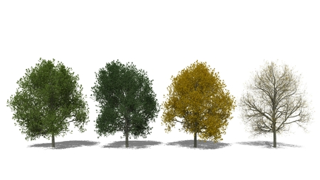 tilia cordata: 3D computer rendered illustration Tilia cordata Four Seasons Stock Photo
