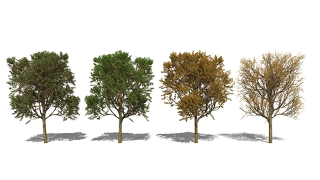 crata�gus: Ordenador en 3D prestados ilustraci�n Crataegus laevigata Foto de archivo