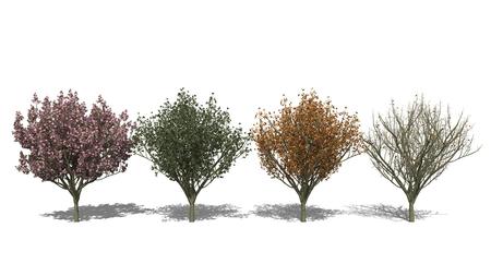 3D computer rendered illustration Prunus serrulata