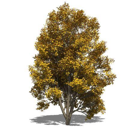 sorbus: 3D computer rendered illustration Sorbus aucuparia autumn Stock Photo