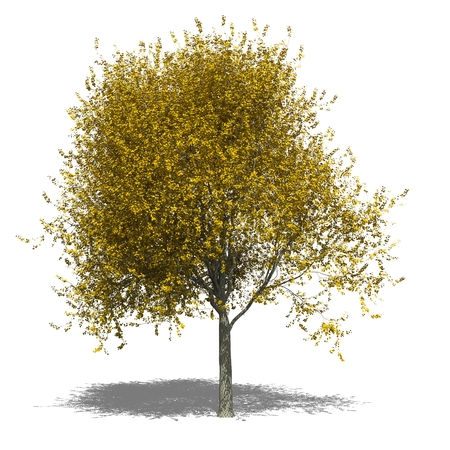 tilia cordata: 3D computer rendered illustration Tilia cordata autumn Stock Photo