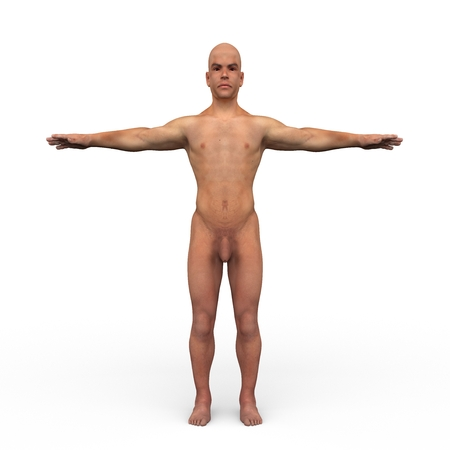 anatomically: rendered illustration of Realistic detailed and anatomically Male Anatomy Stock Photo