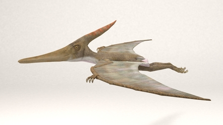 3D Computer rendering illustration of Pteranodon