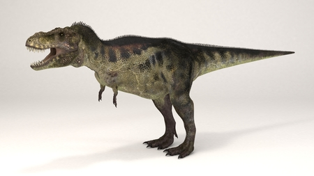 3D Computer rendering illustration of Tyrannosaurus